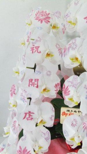 画像3: 化粧蘭5本立 ゴールド(40〜55輪:つぼみ含む)