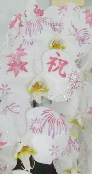 画像3: ミディ化粧蘭5本立
