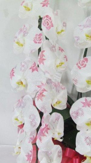 画像2: 化粧蘭5本立 プラチナ(60輪以上:つぼみ含む)