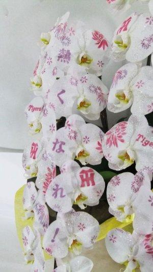 画像2: 化粧蘭3本立 プラチナ【阪神Tigersバージョン】(36輪以上:つぼみ含む)