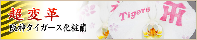 阪神タイガース化粧蘭
